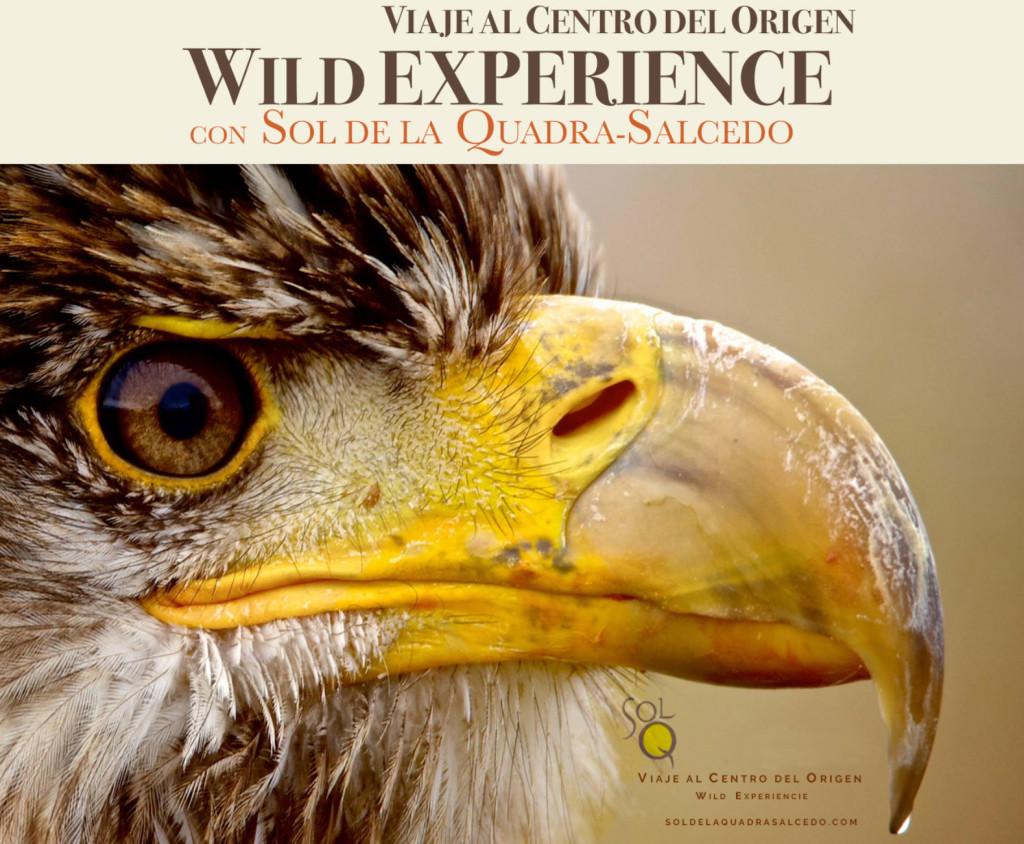 wild-experiencie2