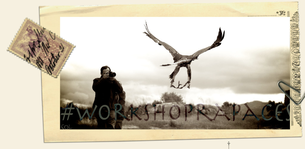 WorkShopRapaces volados