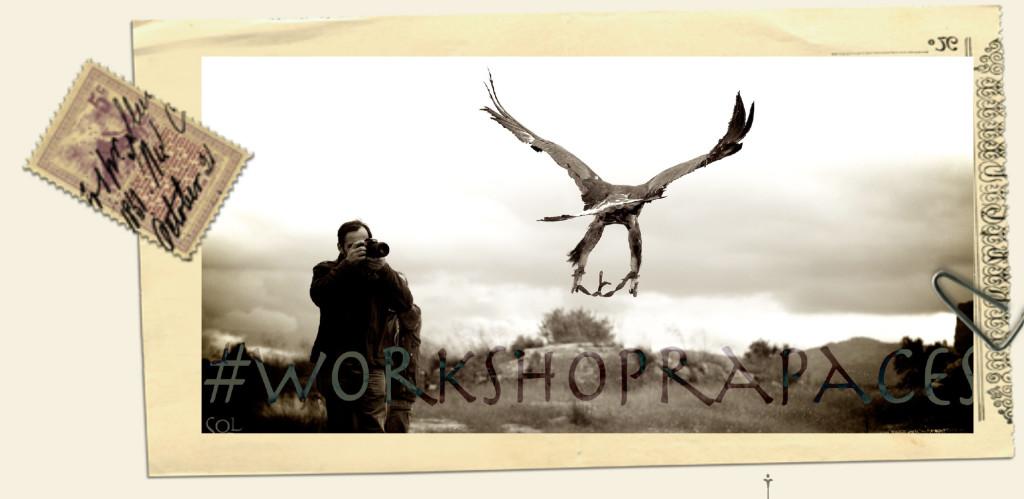 WorkShopRapaces volados