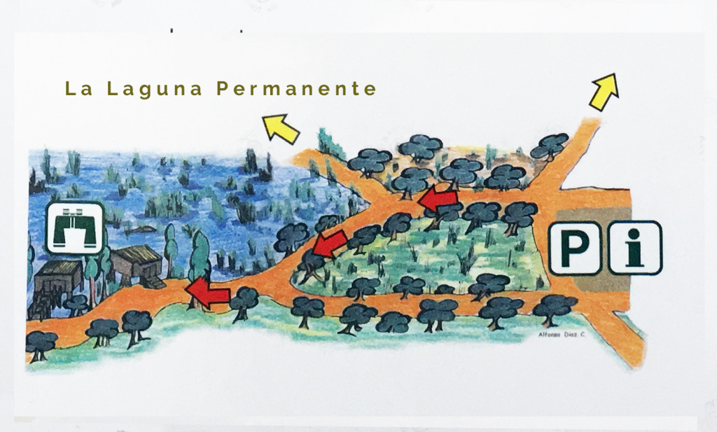 laguna-permanente-wildDaimiel