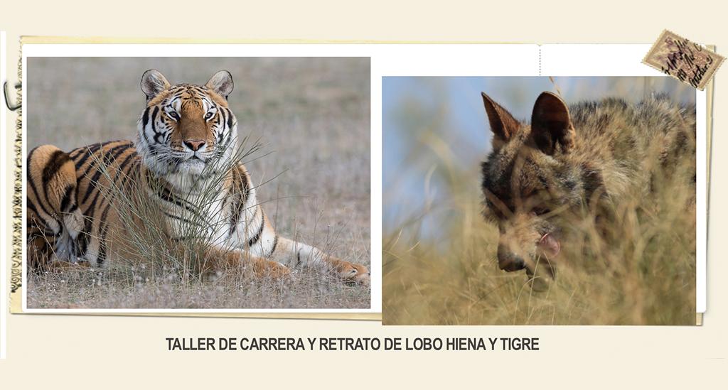 4WEcurso-iniciaciacion-Caza-Fotografica